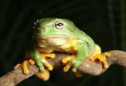 Nursery Frog