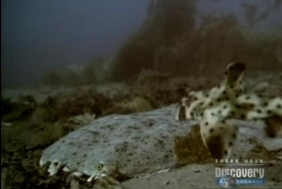 ฉลามกินฉลาม