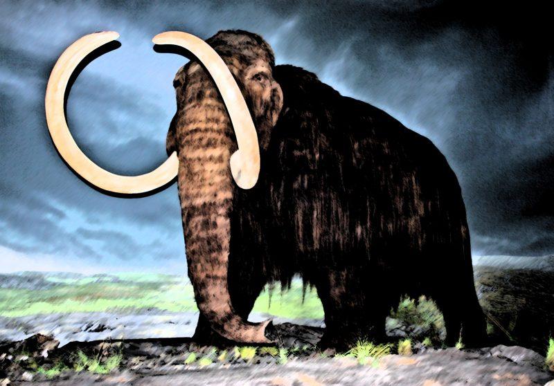 ฮาร์วาร์ดคืนชีพช้างแมมมอธ