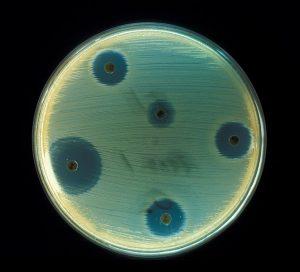 การดื้อยาของเชื้อแบคทีเรีย