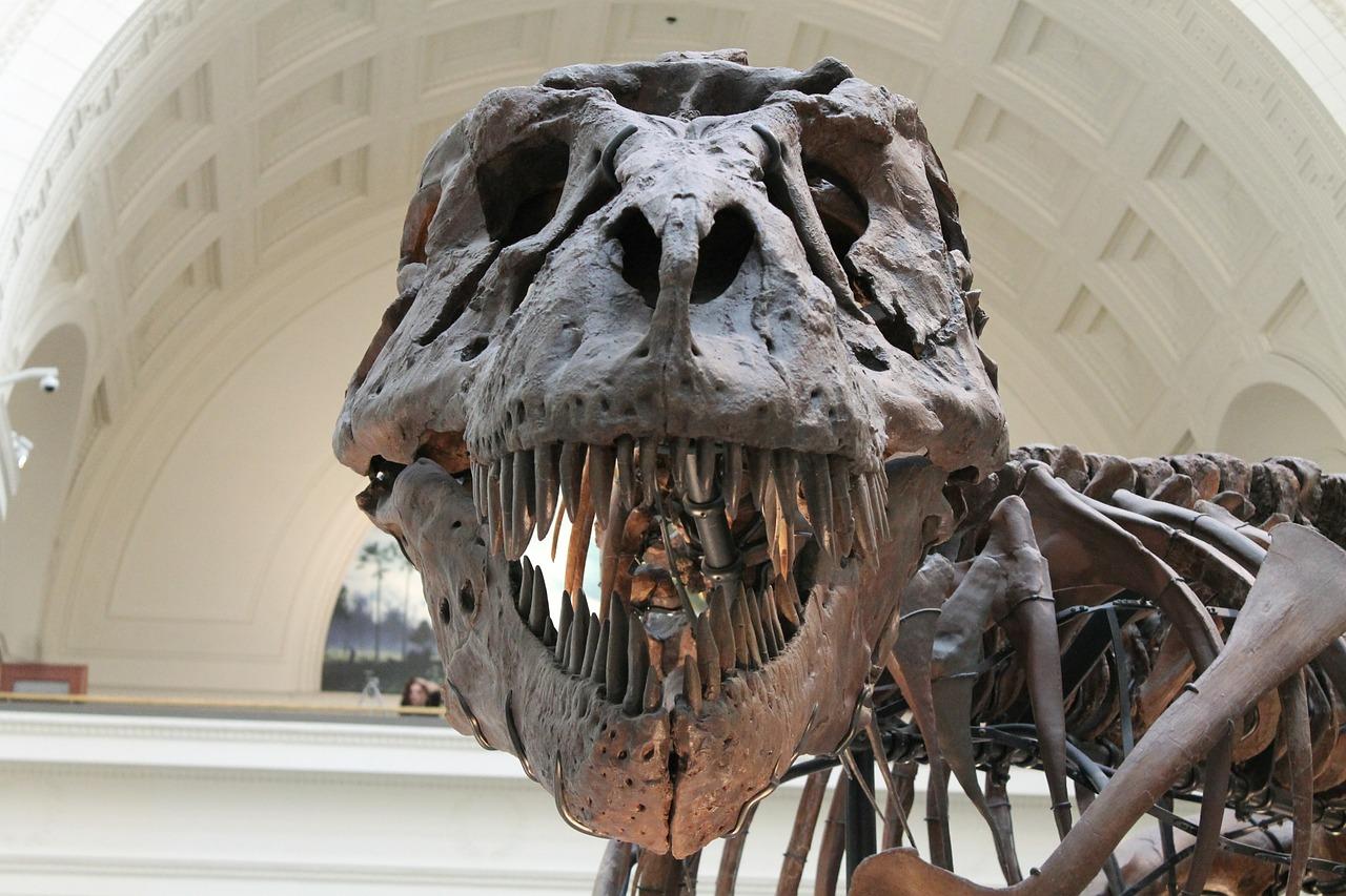 โครงกระดูกไดโนเสาร์ T-Rex
