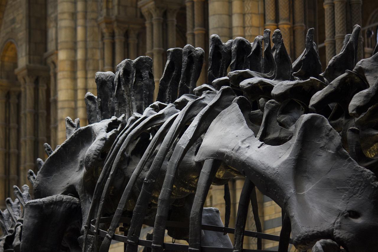โครงกระดูกไดโนเสาร์
