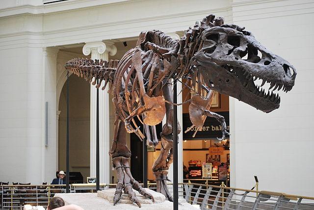 ไดโนเสาร์ T-Rex Sue