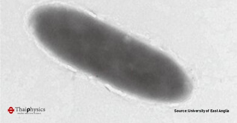 แบคทีเรียที่กินน้ำมันเป็นอาหาร