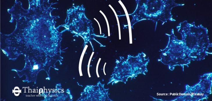 ค้นพบเซลล์มะเร็งสื่อสารกันด้วย Exosomes