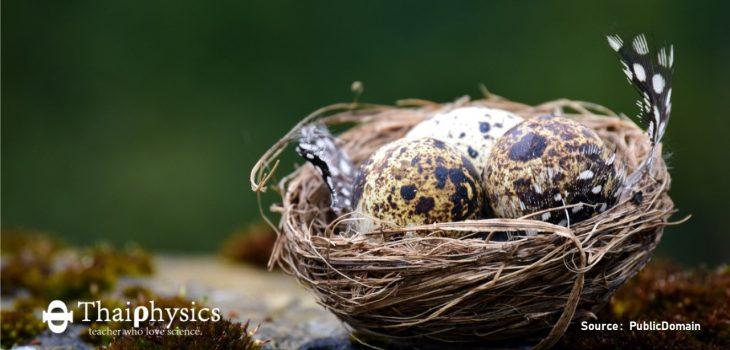 เอ็มบริโอของไข่นกสื่อสารระหว่างกันได้