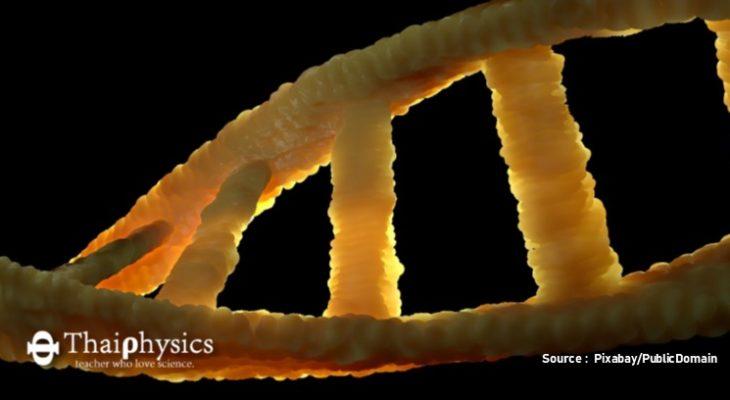 เทคนิคการแก้ไขจีโนมด้วย CRISPR