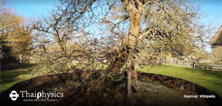 ต้นแอปเปิลนิวตันมีอยู่จริง