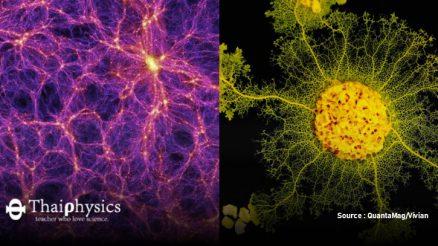 เส้นใยจักรวาลและสไลม์